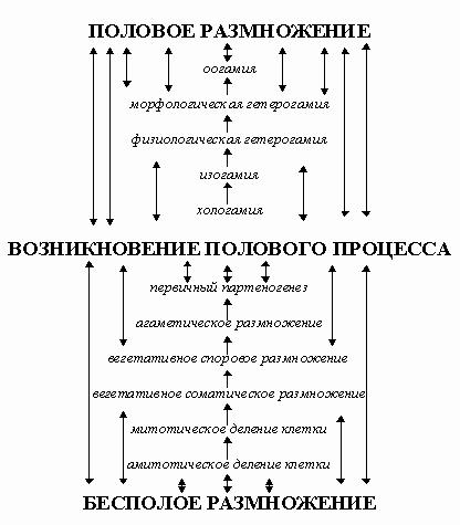 Рис. 6. Эволюция процесса размножения(боковые ветви и совмещение разных способов не учитываются).