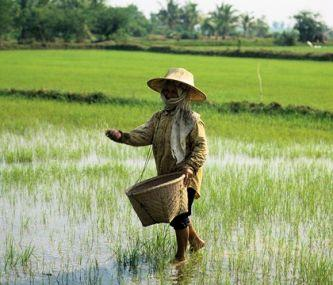 rice-boy