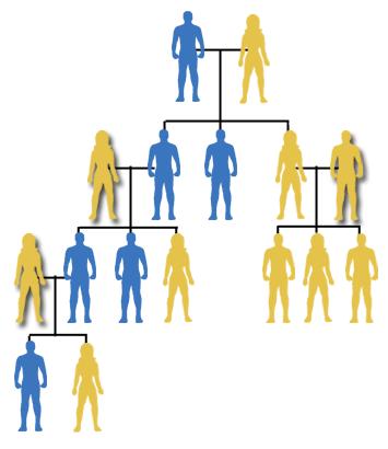 y-hromosoma